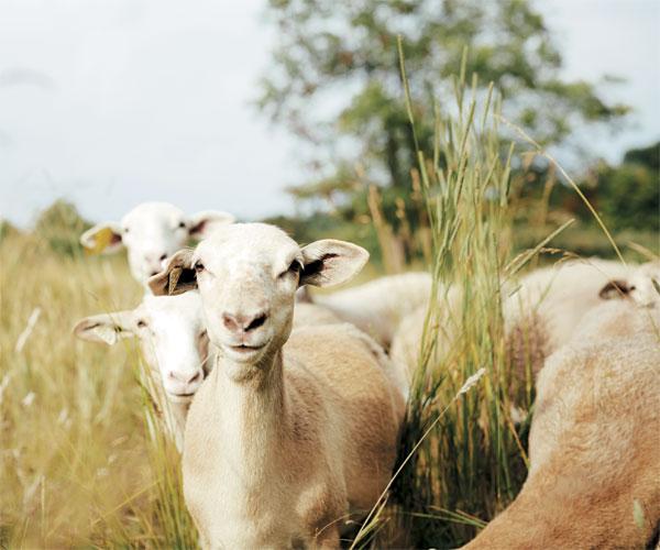 Brunty Farm's Goats