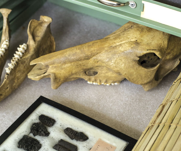 Cleveland Museum of Natural History Archaeology Lab