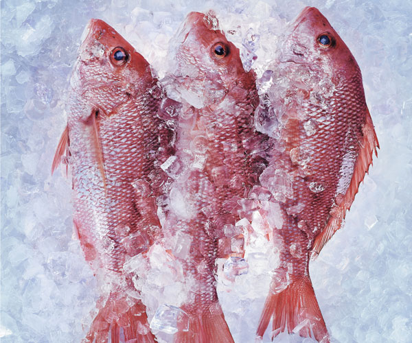 Euclid Fish Thumbnail