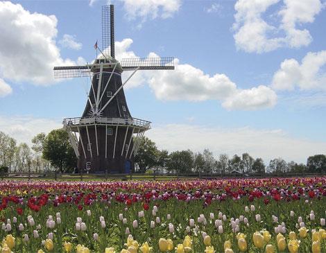 Article_DeZwaan-Windmill--Tulips